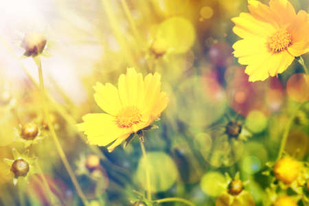 Yellow summer flowers with sunshine over bokeh background photo