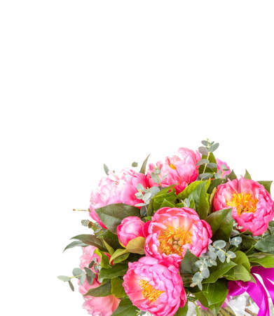 pion: Amazing bouquet of pink pions on white background