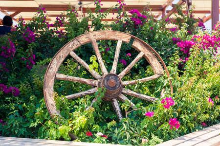 Vieux roue de chariot cassé dans le lit de fleurs