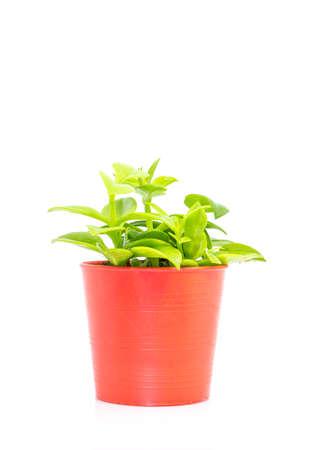 window plant: Window plant a small beautiful tree