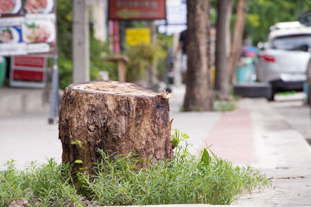 recently: A stump from recently cut big tree on sidewalk Stock Photo