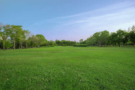lawn grass: green grass field in big city park Stock Photo