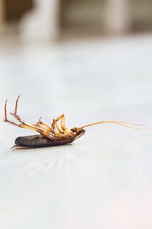 Dead roach on floor