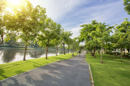 Green public park in the city