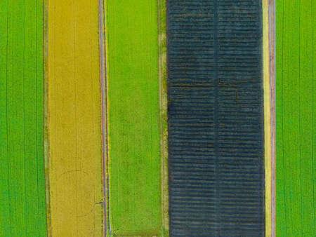 Luftbild von oben von einer fliegenden Drohne eines Landes mit gesäten grünen Feldern Standard-Bild