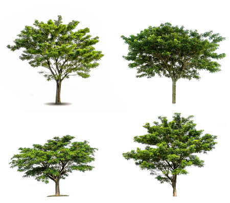 collection of various Tree isolated on white background high resolution for graphic decoration 版權商用圖片