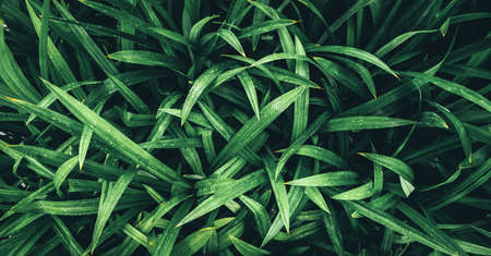 Tropical green leaves, faded dark green filter effect. For background. Imagens