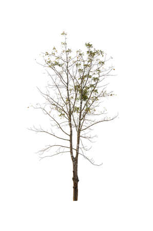 bare tree isolated on white background , The collection of trees