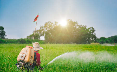 Spraying pesticides on rice seeding field