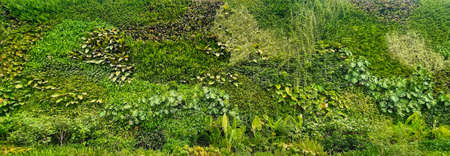 natural green wallpaper and background. nature wall. Foto de archivo