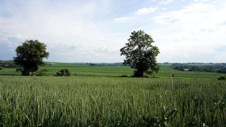land management: crops Stock Photo