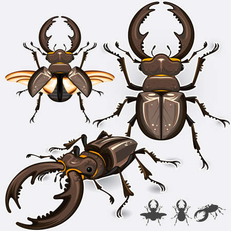 cicada: Large Dark Stag Beetle Insect Bug