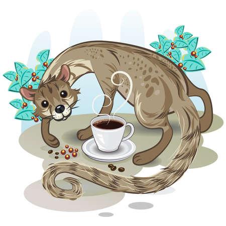 ジャコウネコ コーヒーのコピルアク  イラスト・ベクター素材