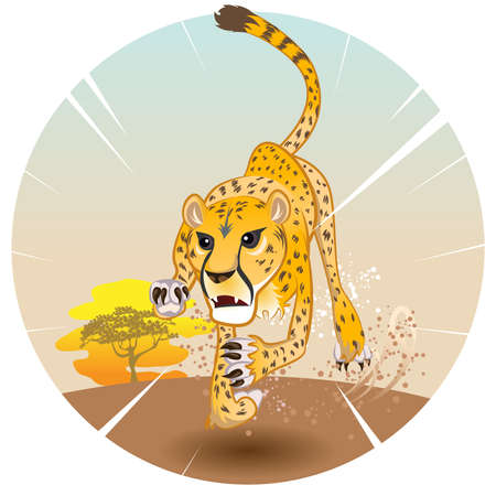 undomesticated cat: Cheetah King of Speed in Pursuit of Prey On Savannah Illustration