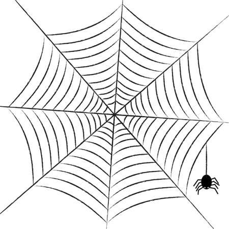 arthropoda: simple web with little spider. vector illustration