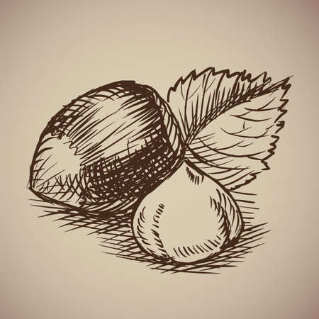 Vector illustration. Drawn by hand. Vintage nuts.
