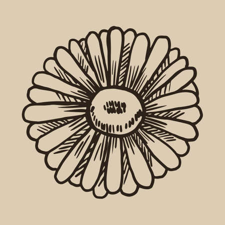 Chamomile engraving. A beautiful and useful flower in the sketch style. Vector illustration.  10. Illustration