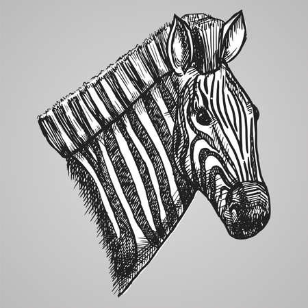 Black and white engraving style zebra head. African horse in sketch style. Vector illustration. Similar image. EPS 10.