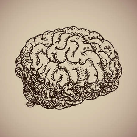 Brain engraving illustration in sketch style.