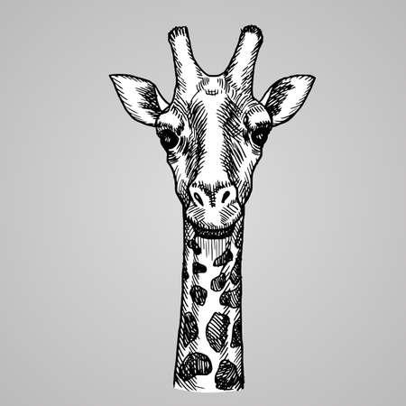 Engraving style giraffe head illustration.