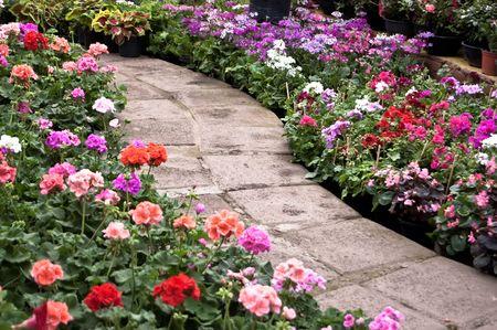 포장 된 경로가있는 정원
