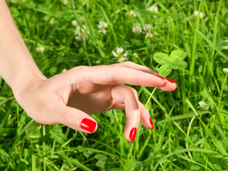 fourleaf: Beautiful female hand with red nail holding four leaf clover. Against green grass background
