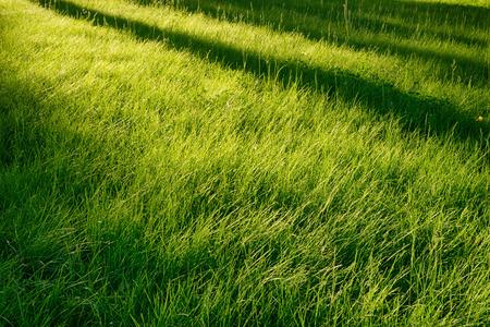 Idyllic green grass glade at morning sun. Long tree diagonal shadows over it. Natural abstract background, seasonal and outdoors theme