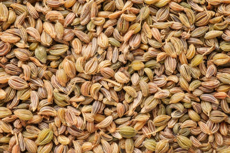 close up food: Parsley seeds close up. Natural warm toned texture and background