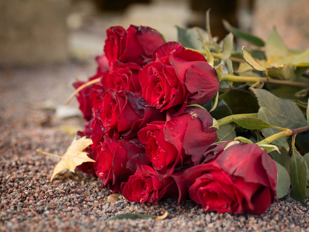 Red roses on the ground. Selective focus. Mourning and memorial theme Stock Photo