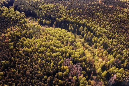 Deep dark forest aerial view. Toned image Stock Photo