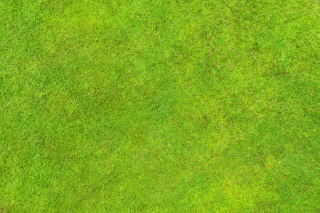 Green lawn top aerial view. Background and texture