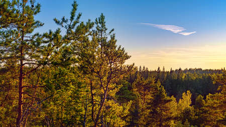 Woodland at sunset. HDR landscape in Karelia, Russia Stok Fotoğraf