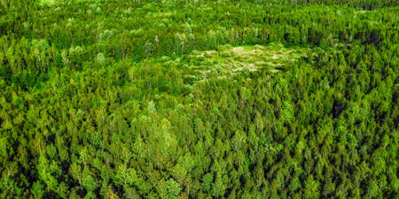 Deep green forest aerial panoramic view. Bright summer image at sunny day Stok Fotoğraf
