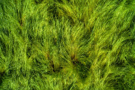 Tangled grass top view. Natural HDR background and texture