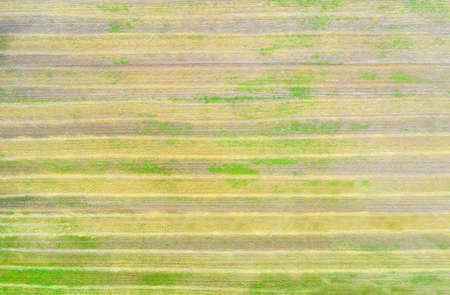 Harvested autumn striped field aerial top view for texture and background Stok Fotoğraf