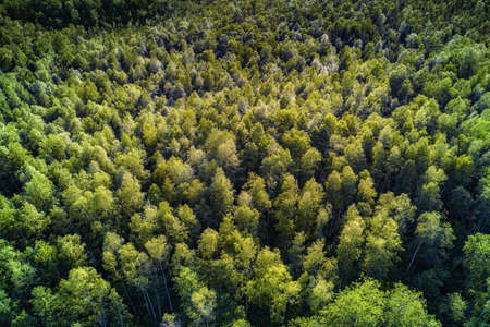 Deep green forest aerial view. Natural background