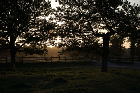 Evening photo of park with hazy background and tree silhouettes. 版權商用圖片