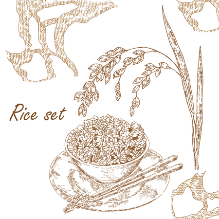 illustration rice plant Illustration