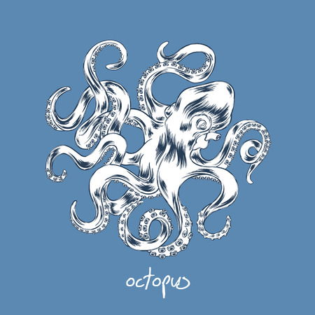 Octopus tiré par la main illustration. Vecteurs
