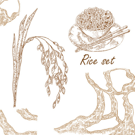 Hand drawn illustration rice plant