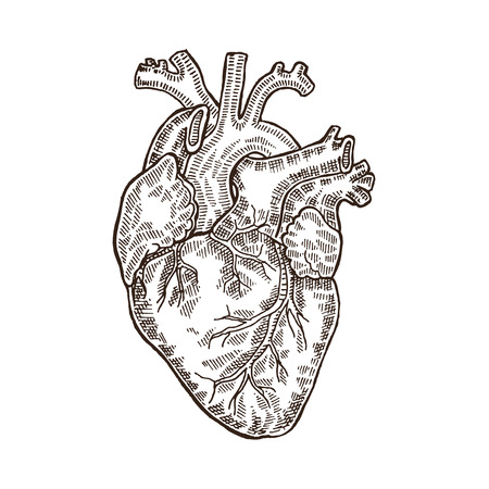 Vintage engraved human heart. Vector illustartion isolated