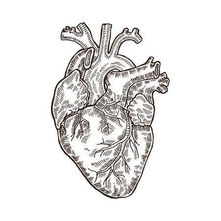 Vintage gravé coeur humain. Vector illustartion isolé