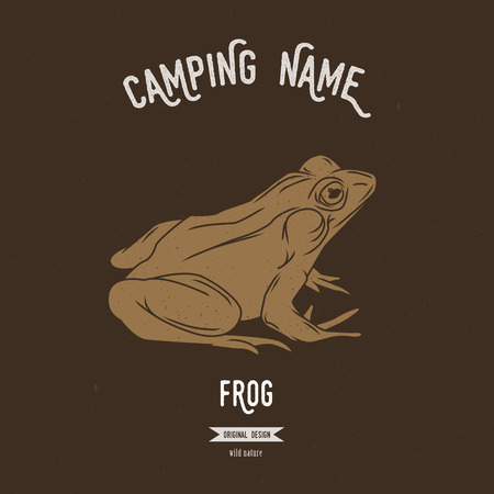 amphibia: Frog vector illustration. Illustration