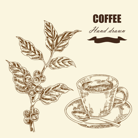 a twig: Hand drawn coffee twig and cup of coffee. Vector illustration in sketch style Illustration
