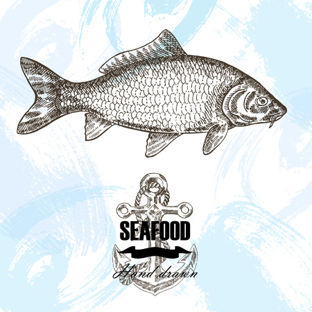 carp fish: Vintage seafood sketch background. Hand drawn carp fish vector illustration.
