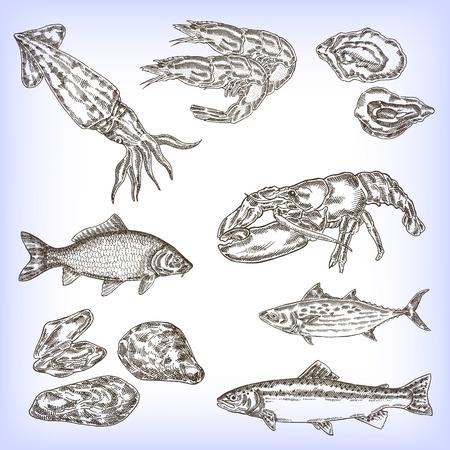 brown trout: Hand drawn seafood set. Engraved vector fish, calmar, shrimp, lobster. Vector illustration