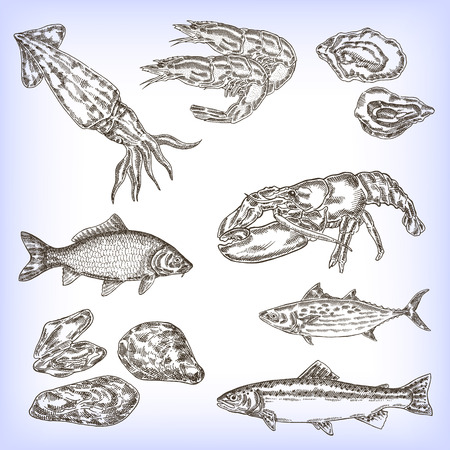 Hand drawn seafood set. Engraved vector fish, calmar, shrimp, lobster. Vector illustration