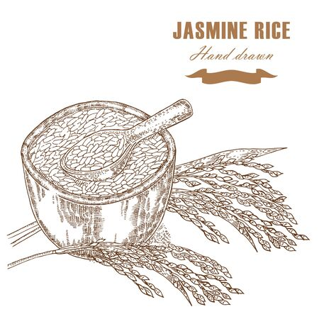 jasmine rice: Thai jasmine rice in a bowl. Rice plant hand drawn. Vector illustration in sketch style Illustration