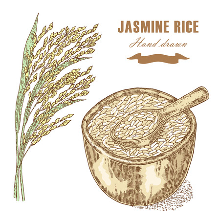 jasmine rice: Thai jasmine rice in a bowl. Rice plant hand drawn. Vector illustration in sketch style isolated Illustration