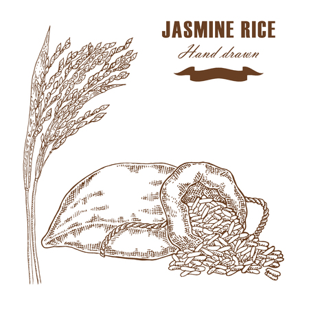 jasmine rice: Thai jasmine rice in sack. Rice plant hand drawn. Vector illustration in sketch style Illustration